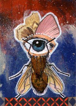 One Eyed Fly, Oh My